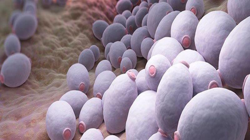 برفک مهبل در بسیاری از خانمها در دیده میشود که این موارد بیشتر در سالهای باروری آنها می باشد بیماری برفک مهبل به وسیله قارچ و به نام کاندیدا آلبیکانس ایجاد میشود.