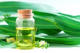 اثرات اصلی اکالیپتوس  مربوط به اسانس برگ هاست است که دارای خاصیت ضد احتقان و ضد میکروب  وضد سرفه خوبی است، به همین دلیل به شکل بخور دارای مصرف بالایی در جهان است . تنفس اسانس یا بخور اکالیپتوس توسط ریه ها باعث اثرات ضد احتقان ،  خلط آور ،  ضد میکروب و کاهش تورم غشای مخاطی گلو می گردد .  همچنین چای  تهیه شده از برگ اکالیپتوس در برونشیت و ورم گلو و کاهش سرفه موثر و مفید است.