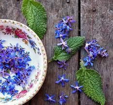 گل گاوزبان به خاطر داشتن موسیلاژدارای خاصیت خلط آور است. مقوی اعصاب و مسکن و آرام بخش خوبی  است خاصیت باد شکن داشته ، ضد التهاب ، ضدتب ، ضد اسپاسم ، محرک غدد آدرنال است .