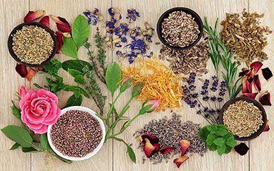 گیاهان دارویی ، امروزه بسیاری از داروهای گیاهی و طبیعی در رشتههای گیاه درمانی ، همیوپاتی ، رایحه درمانی ، لجن درمانی ، گل درمانی و روشهای طب مکمل دیگر، در حال استفاده وسیع بوده و میلیونها نفر در جهان از آن استفاده می کنند.